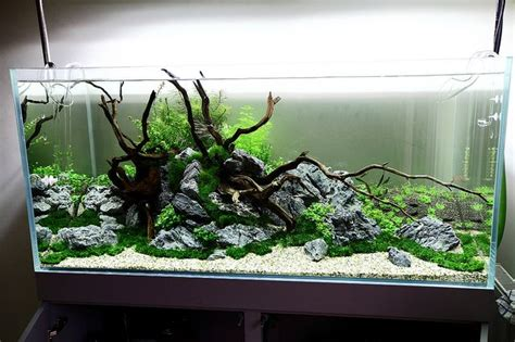 Wood+rock Aquascape Idea  Aquascaping Pinterest
