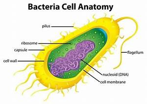 Bacterial Cell Parts