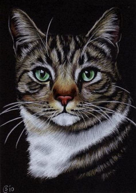 164 Best Images About Drawing Cats & Kittens On Pinterest