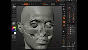 Anatomy Of The Face For Artists  Why Anatomy