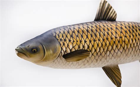 cuscini regalo gaby cuscini amur pesca carpfishing carpa lago fiume idea