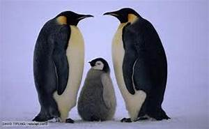 10 Interesting Emperor Penguin Facts | My Interesting Facts