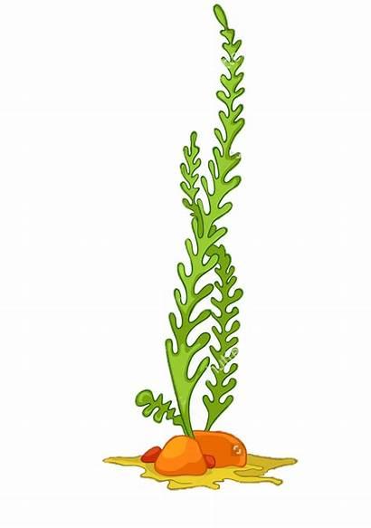 Plants Seaweed Clipart Plant Aquatic Clip Coral