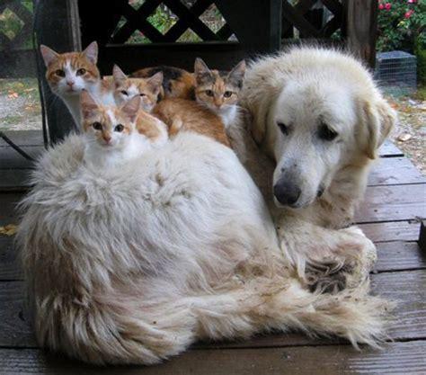 proxecto gato cute cute cats  dogs