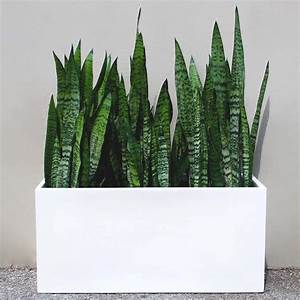 Root, And, Stock, Belmont, Rectangle, Planter, Box