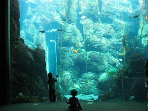 the amazing aquarium picture of california science center los angeles tripadvisor