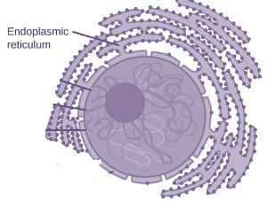 cbse ncert notes class  biology fundamental unit  life