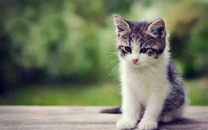 Cats Wallpapers Cat