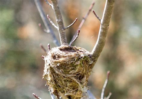 Let's talk about birds: Birds' nests | Pittsburgh Post-Gazette
