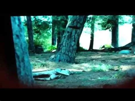 geico      tree falls   forest youtube