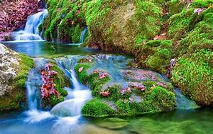beautiful waterfalls with flowers - Google Search | Scenic ...