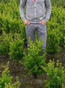 Alternative Zum Buchsbaum : buchsbaum buxus ist krank was sind die ursachen und was k nnen wir unternehmen fragen ~ Frokenaadalensverden.com Haus und Dekorationen