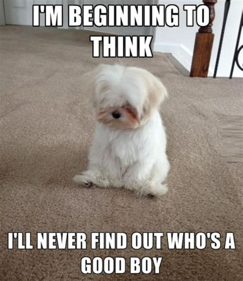 Funny Daily Memes - very cute and funny dog memes daily funny memes