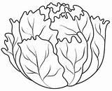 Lettuce Coloring Pages Vegetables Fruits Vegetable Colouring Leaf Fruit Drawing Printable Templates Template Autumn Orange Preschool Para Preschoolactivities Lechuga Patterns sketch template