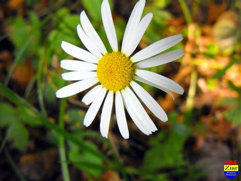 O floare din Neamt