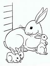 Pages Coloring Rabbits Printable Animals sketch template