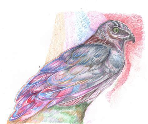 ella penso animal drawing class eagles