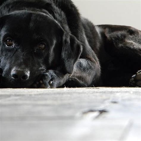 dog  vomiting white foam symptoms  treatment