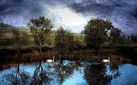 nature lake water trees animals reflection swans