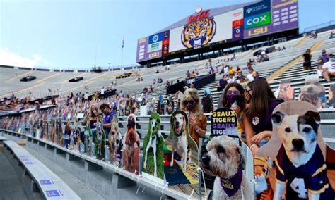 Photos: LSU Football Makes Fan Section of Dog Cutouts in ...