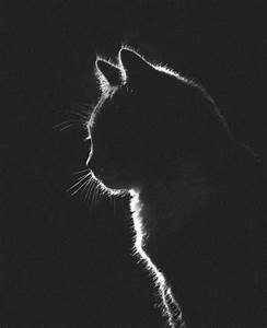 black and white photography on Tumblr