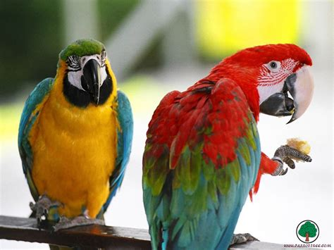 Birds Walpaper Reviews