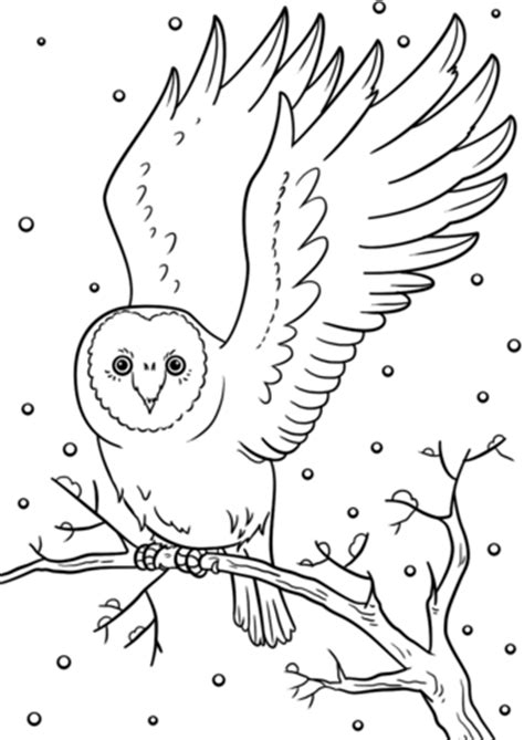 winter owl coloring page  printable coloring pages