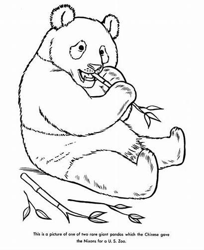 Panda Coloring Pages Bear