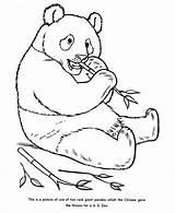 Coloring Panda Popular Animal sketch template