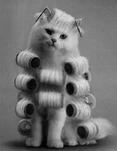 Choupette Chat Karl : 19 best choupette lagerfeld images on pinterest karl lagerfeld choupette cats and kittens ~ Medecine-chirurgie-esthetiques.com Avis de Voitures