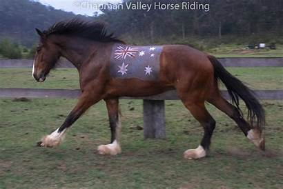 Horses Halloween Valley Horse Costumes Riding Lukey