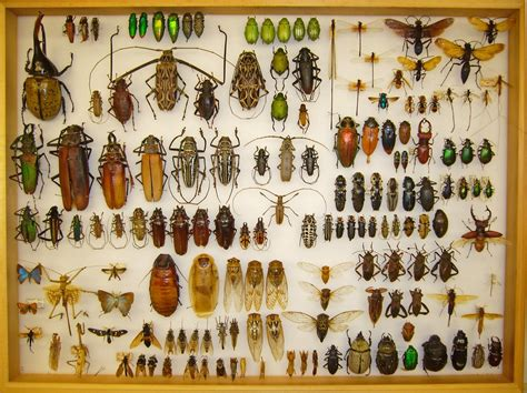 My Collection  Beetles In The Bush