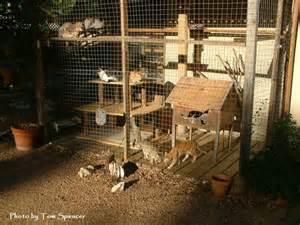 cat enclosures on pinterest cat enclosure outdoor cat