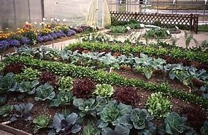 Mischkultur Im Garten : mischkultur im garten auf balkon und terrasse ~ Orissabook.com Haus und Dekorationen