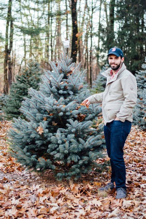 christmas tree farms in topsfield ma where you can cut down trees tree farm outing in massachusetts by gabriella