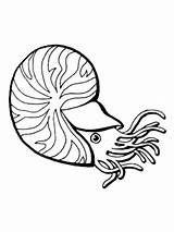 Nautilus Coloring Chambered Drawing Cuttlefish Para Shell Oyster Dibujar Line Crustaceos Printable Colorear Dibujos Template Balkhheritage Designlooter Clipart Drawings Sea sketch template