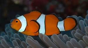 What types of fish are in Finding Nemo? - Quora