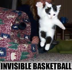 basketball cat invisible cats 1funny