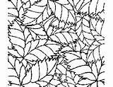 Tropical Coloring Leaf Pattern Printable Flowers Plants sketch template