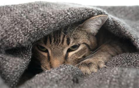 scheuen katzen die angst nehmen agila