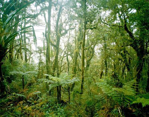 el nino meets  rain forest   yorker