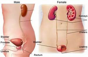 Bladder Cancer - More FAQs You Should Know!