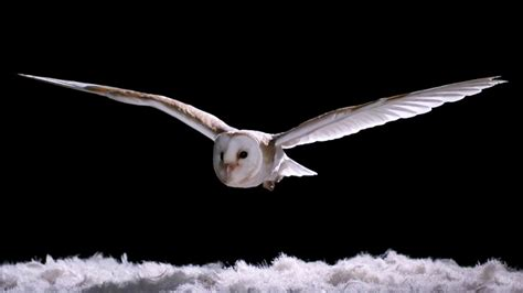 experiment    owl fly  silently super