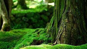 Green Nature Wallpaper BDFjade