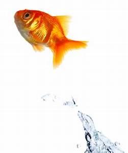 Jumping Fish Png