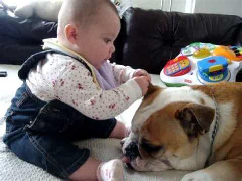 Baby Bites Bulldog Youtube