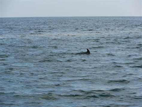 Glass Bottom Boat Tours Alabama by Dolphin Fins Picture Of Glass Bottom Dolphin Tours