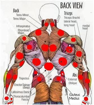 The human back extends from the buttocks to the posterior portion of the neck and shoulders. Probes