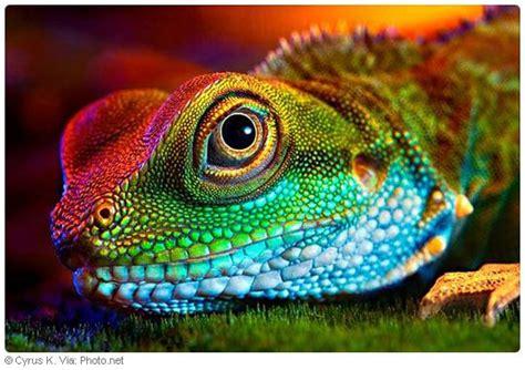 pin  ernesto jimenez  clip art colorful lizards