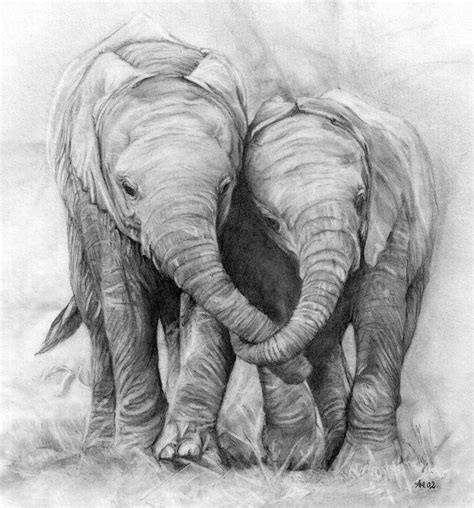 elephants pencil drawing  photo  flickriver